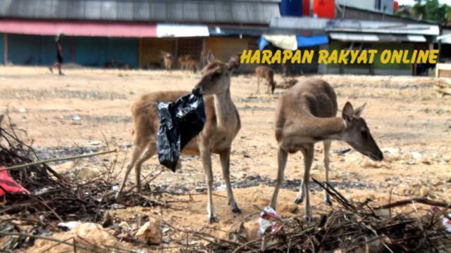 Kabur dari Cagar Alam Pangandaran, Rusa Masih Ditemukan di Bandara Nusawiru