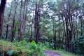 Kawasan Hutan di Pangandaran Diusulkan Dikelola BUMDes
