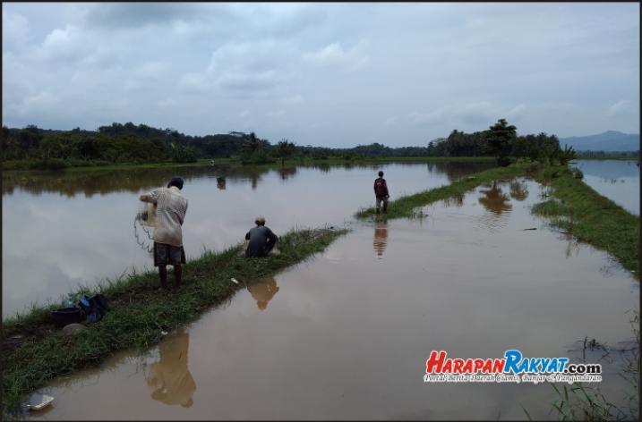 Banjir di Purwadadi Ciamis Berkah Bagi Pemburu Ikan