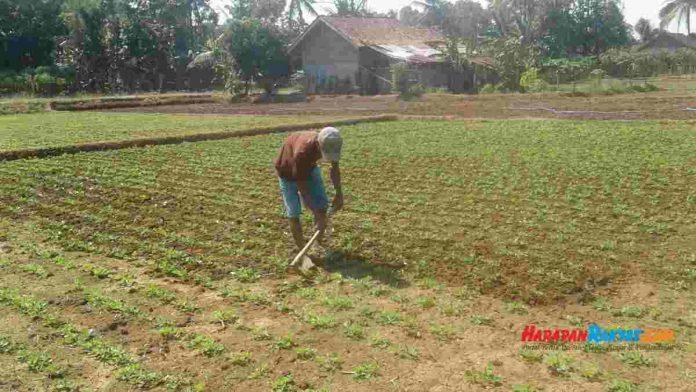 petani kota banjar