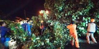 Arus Lalin di Pamugaran Pangandaran Sempat Terganggu Akibat Pohon Tumbang