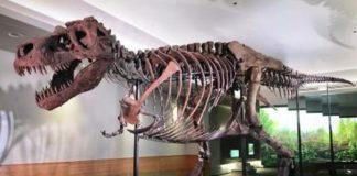 Penyebab Dinosaurus Punah dan Sejarahnya