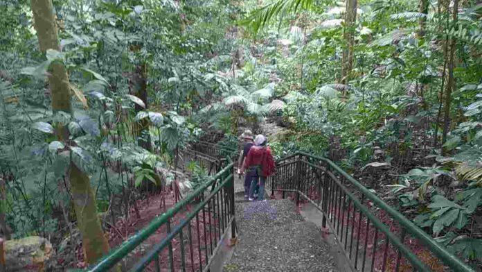 Hutan Pasarean Ciamis