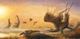 Penemuan Fosil Falcatakely Forsterae