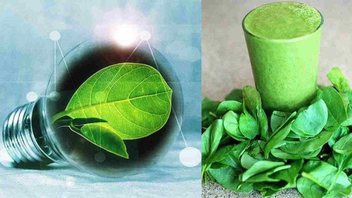 manfaat daun klorofil