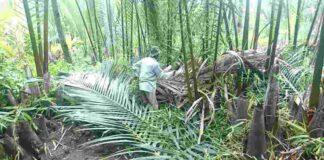 Tradisi Ngaweulit di Pangandaran